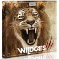 wildcats-sound-effects